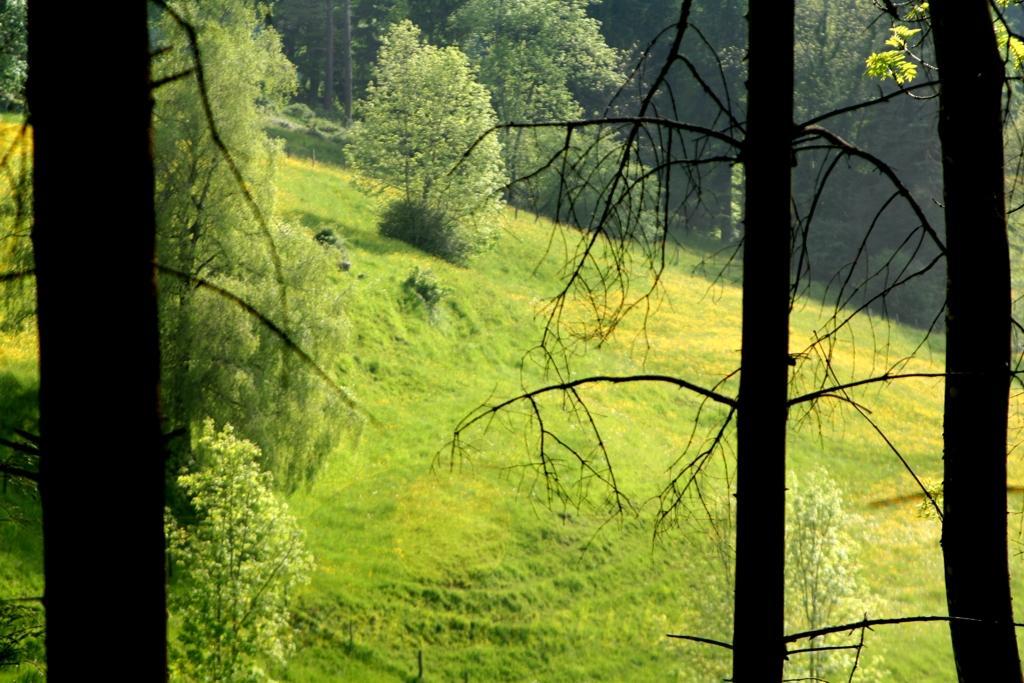 Ausblick vom Ritual Platz der Schamanenstube in den Hügeln des Tösstals