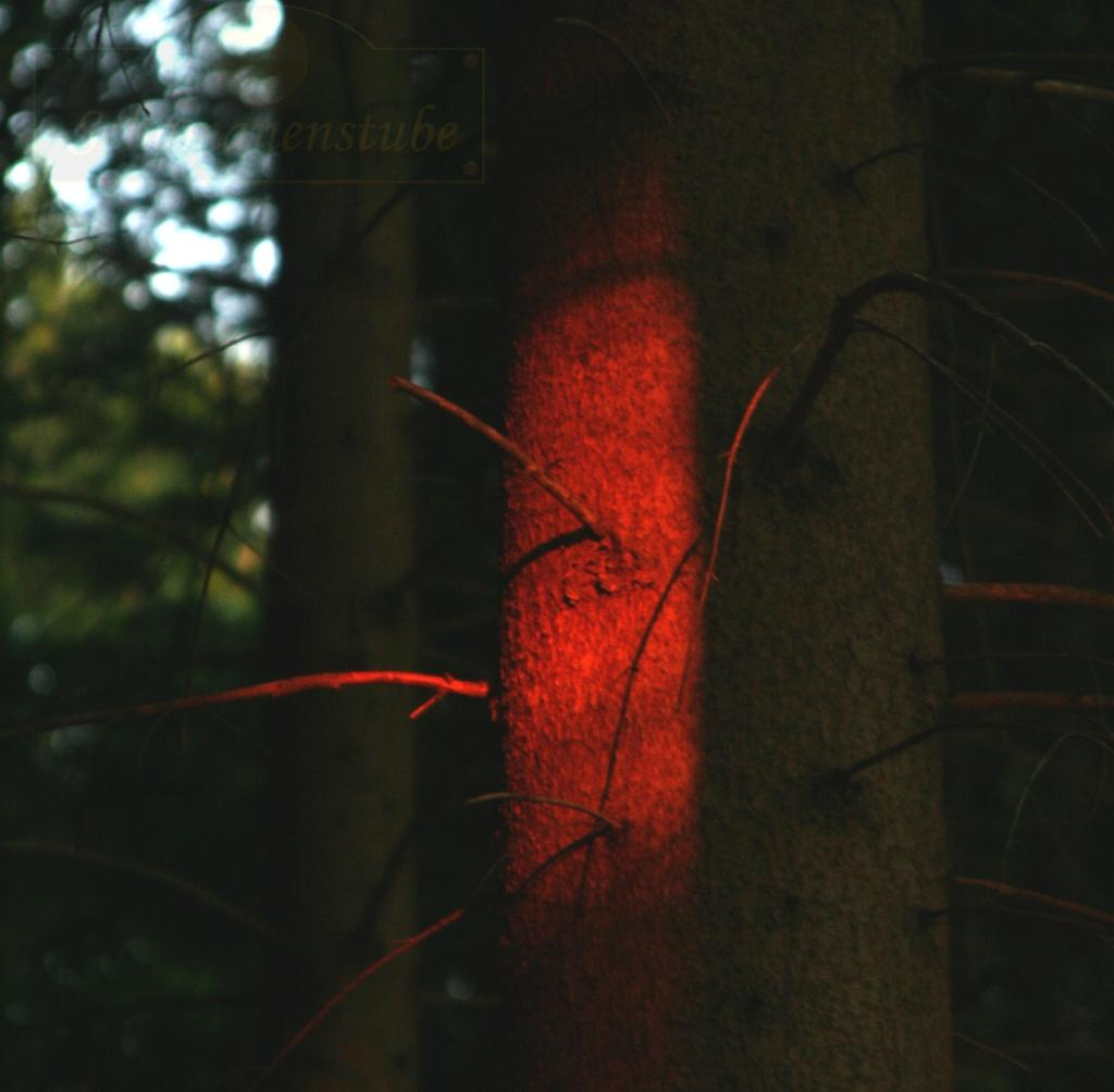Baum Begegnung Zürich