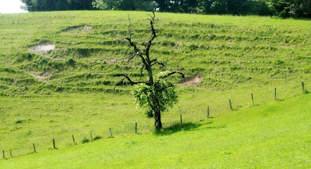 Baum Gestalt