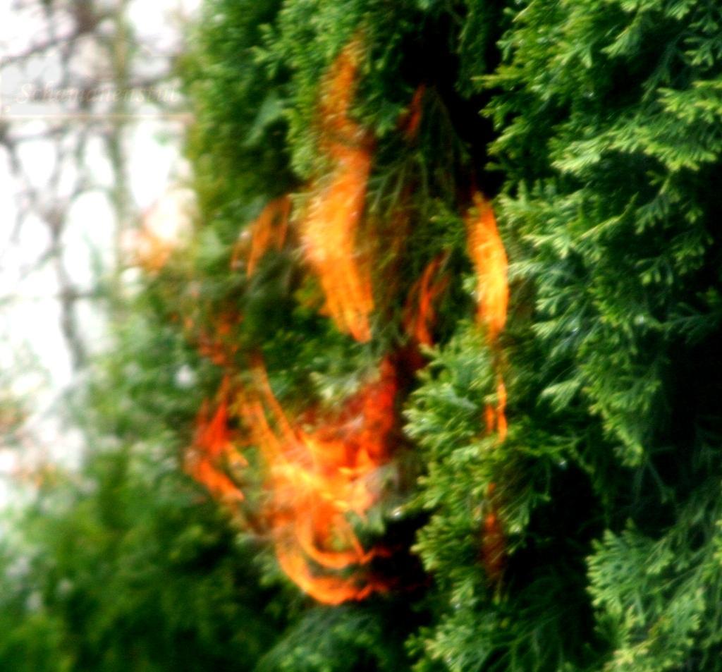 Brenndender Busch