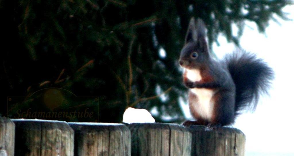 Eichhörnchen Schamanismus Interesse