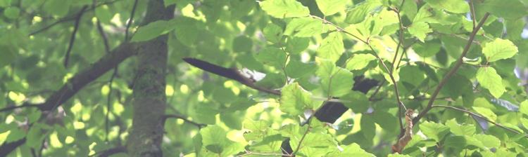 Feder im Baum
