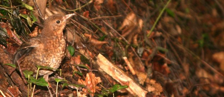 Fidel auf dem Waldboden hinter dem Waldhaus