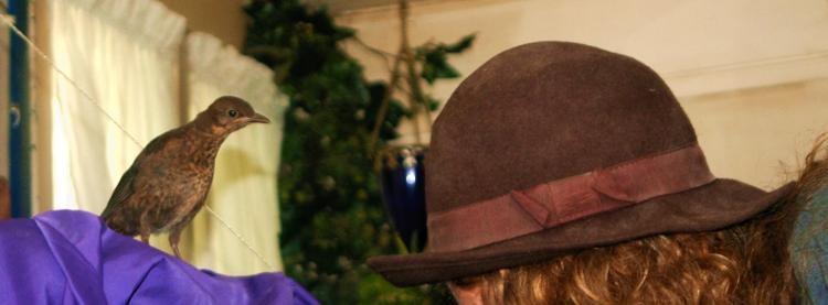 Die Amsel und der Hut