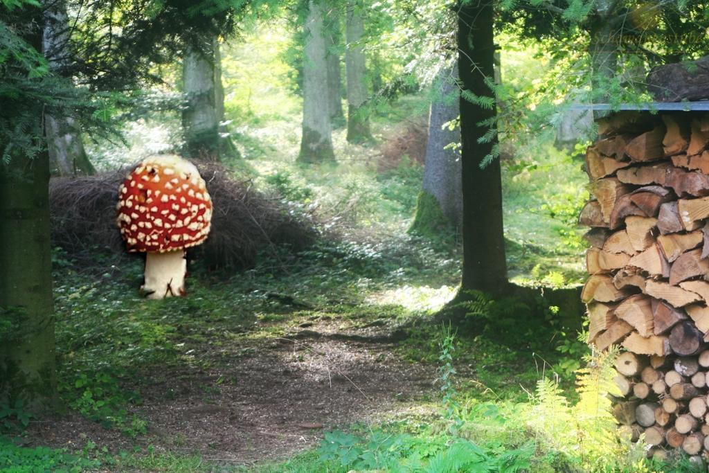 Mystische Pilze im Wald