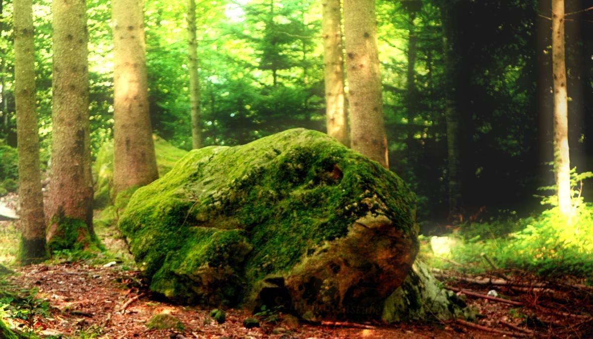 Frosch Stein im Wald