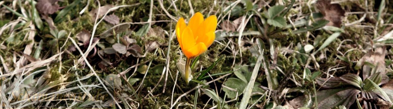 Frühling - neue Ordnungen - neue Kraft