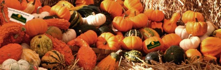 Kürbisse Herbstfarben
