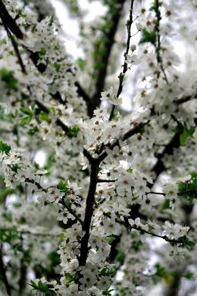 Lebenskraft - Schamanismus im Frühling