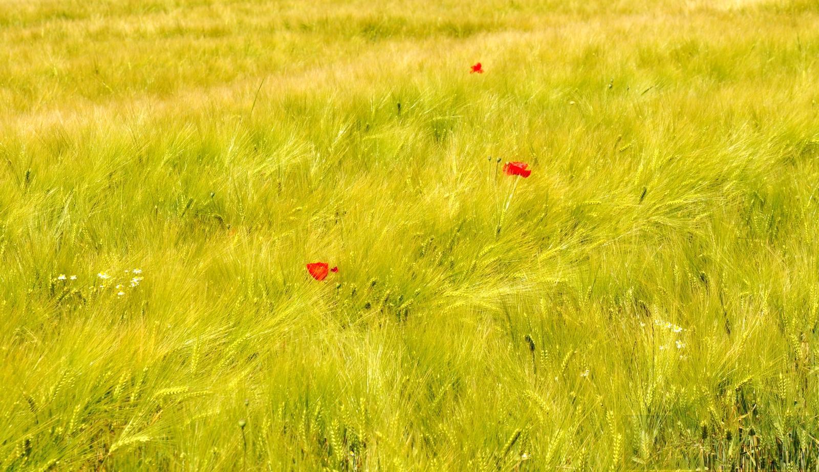 Feld des Windes