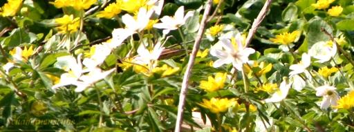 Schamanen Frühling