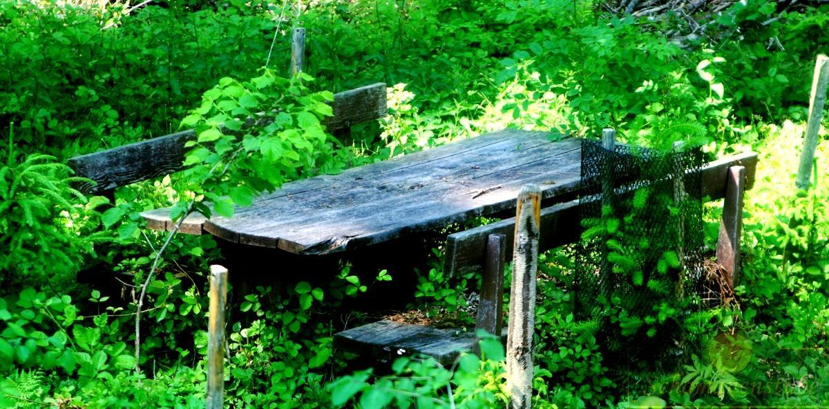 Tisch im Wald