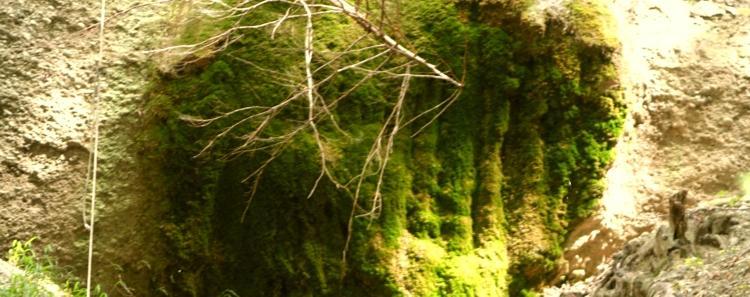 Bemooster Fels am Wasserfall