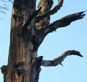 Schuldbaum